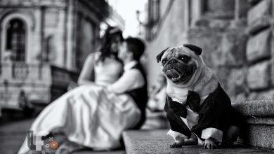 Top 10 bức ảnh cưới năm 2015 trên 500px   50mm Vietnam