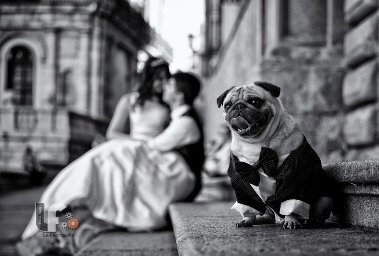 Top 10 bức ảnh cưới năm 2015 trên 500px | 50mm Vietnam