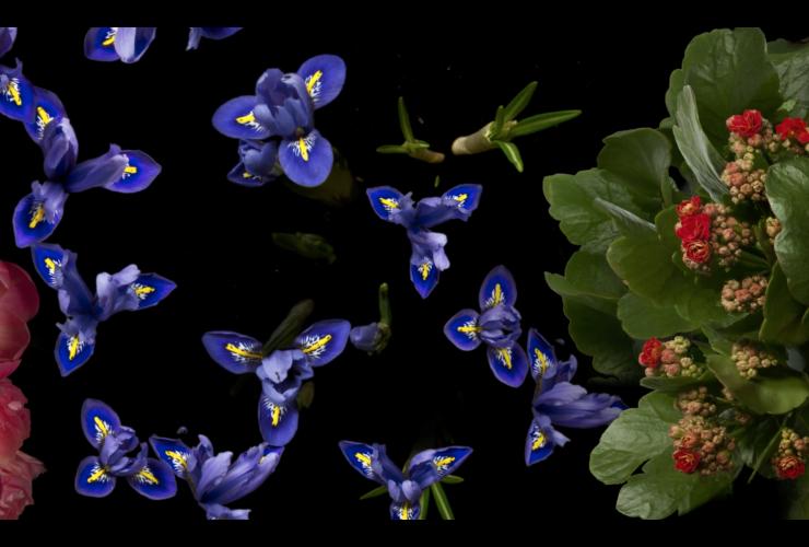 3 năm, 8TB ảnh, 1 video time-lapse hoa nở ấn tượng!   50mm Vietnam