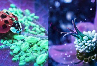Bộ ảnh dưới ánh đèn huỳnh quang cực lạ và đẹp!   50mm Vietnam