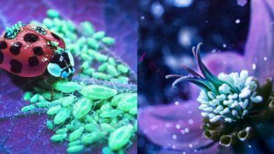 Bộ ảnh dưới ánh đèn huỳnh quang cực lạ và đẹp! | 50mm Vietnam
