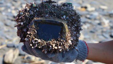 Chiếc camera trôi dạt 2 năm ở biển sâu và nay lại về với chủ cũ | 50mm Vietnam