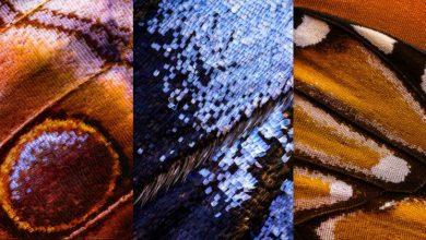 Kì công macro cánh bướm từ 2000 mảnh ghép | 50mm Vietnam
