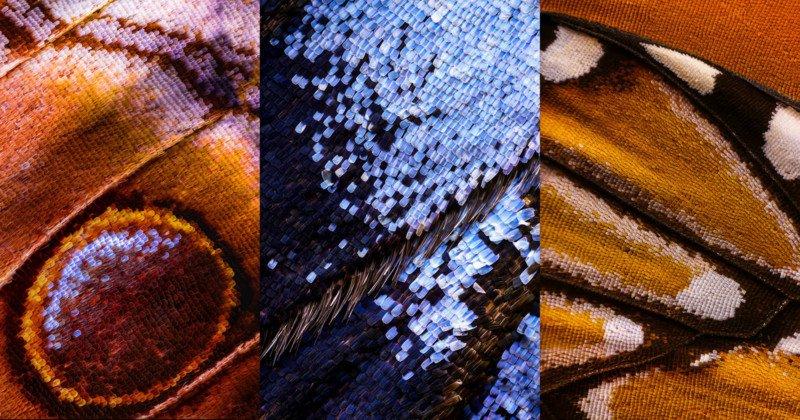 Kì công macro cánh bướm từ 2000 mảnh ghép   50mm Vietnam