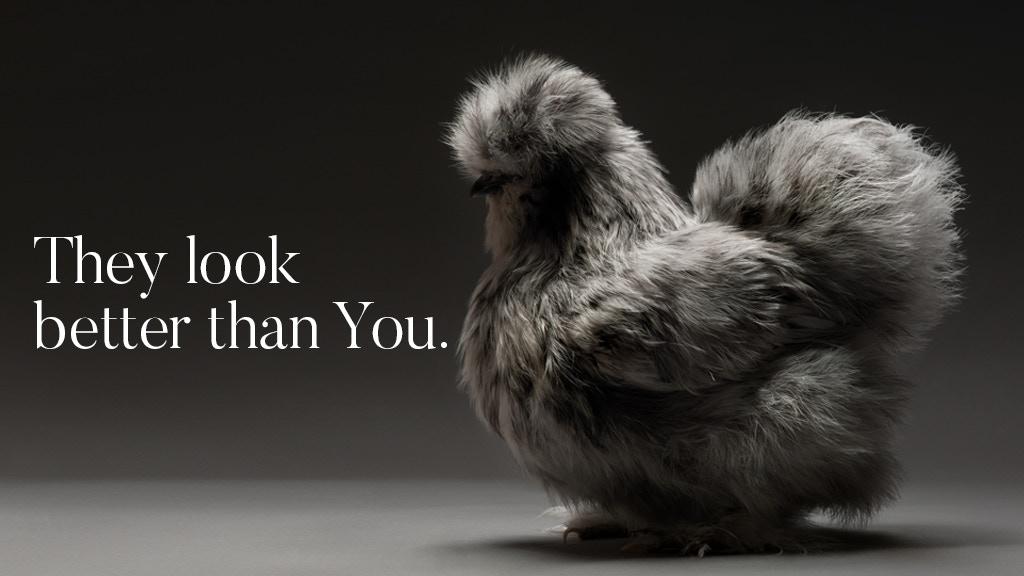 Cùng chiêm ngưỡng những gà mẫu xinh tươi nhất dải Ngân Hà | 50mm Vietnam
